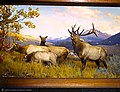 American Wapiti Family Group, Trapper's Lake region, Colorado, diorama, Hall of North American Mammals.jpg