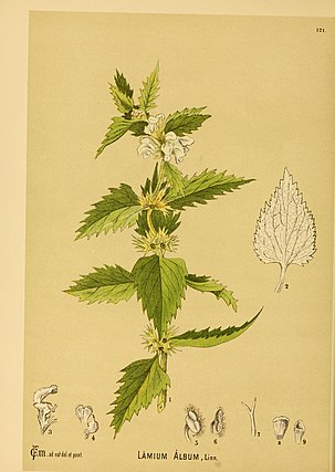 Chemistry essay medicinal plant