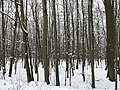 An der Borheckstraße im Winter.jpg