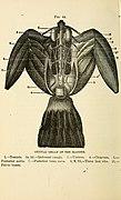 Animal castration (1902) (18009831089).jpg