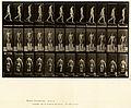 Animal locomotion. Plate 114 (Boston Public Library).jpg