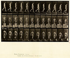 Animal locomotion. Plate 114 (Boston Public Library).jpg
