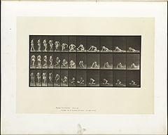Animal locomotion. Plate 256 (Boston Public Library).jpg
