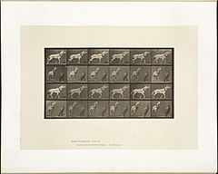 Animal locomotion. Plate 573 (Boston Public Library).jpg
