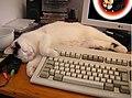 Animal testing 1.jpg