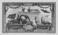 Animaux d'outre-Mer (Ondrata et Desman) - Overseas Animals (Muskrat and Desman) - Gallica - ark 12148-btv1b23002572-f2.png