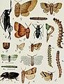 Annales de la science agronomique franaise et trangre (1884-1930) (18198181192).jpg
