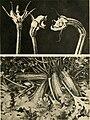 Annali di botanica (1923) (18385130496).jpg