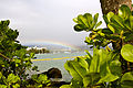 Another one... in Hilo Bay.jpg