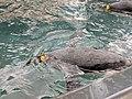 Antarctica- Empire of the Penguins (37095635346).jpg