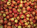 Apfel jonagold2.JPG