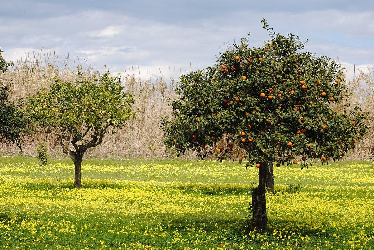 Prato agricoltura wikipedia for Tipi di prato