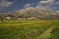 Argon-Field Nestani-Polje Arcadi Peloponnese.jpg