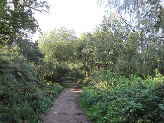 Arkley Lane and Pastures - Arkley Lane