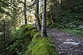 Arosa - forest trail.jpg
