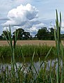 Ashby Canal and farmland - geograph.org.uk - 931504.jpg