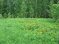 Asinovsky District, Tomsk Oblast, Russia - panoramio (180).jpg