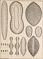 Atlas der Diatomaceen-Kunde (1874) (14782610865).jpg