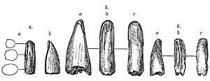 "Aublysodon - Illustrations of the teeth by Leidy and O. C. Marsh, 4: A. mirandus 5: ""A."" amplus 6: ""A."" cristatus"