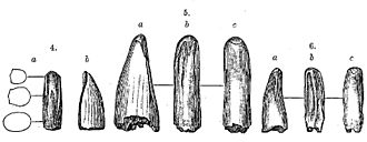 Tyrannosauridae - Teeth that have been assigned to Aublysodon at various times