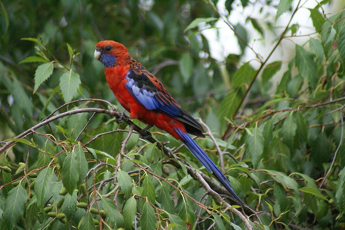 Postcode Australia -Postcodes Finder & Search - Part 2