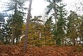 Autumn in Five Hundred Acre Wood - geograph.org.uk - 1584992.jpg