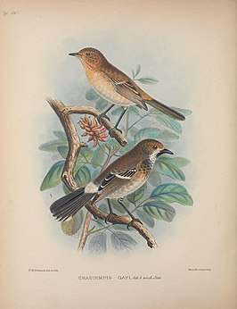 Aves Hawaiienses (Pl. 50) (8465182608).jpg