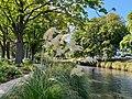 Avon river, Christchurch 2.jpg