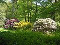 Azaleen- und Rhododendronpark Kromlau.jpg