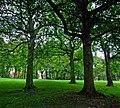 Backhouse Park - panoramio - somaliayaswan (2).jpg