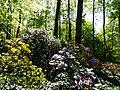Bad Sassendorf – Kurpark - Rhododendronpark am 6. Mai 2016 - panoramio - Edgar El (1).jpg