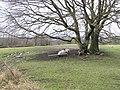 Ballyrenan Townland - geograph.org.uk - 137623.jpg