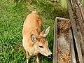 Bambi - panoramio (2).jpg