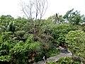 Bang Kachao, Phra Pradaeng District, Samut Prakan, Thailand - panoramio (11).jpg