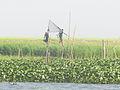 Bangladesh Village Scene.jpg