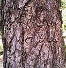 Bark of Hardwickia binata.jpg