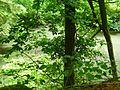 Basaltweg Tharandter Wald (3).jpg