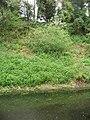 Basingstoke Canal - geograph.org.uk - 1670918.jpg
