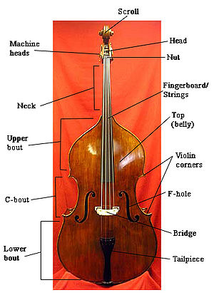 Principal Parts Of The Double Bass