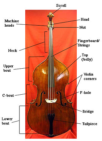 Double bass - Principal parts of the double bass