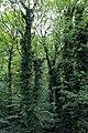 Baumkronenpfad Tiergarten Schönbrunn Wien 2014 a.jpg