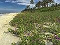 Beach Flowers (151049747).jpeg