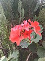 Beauty of Nature 17067.jpg