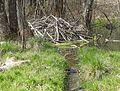 BeaverHaidSaalfelden 05.jpg