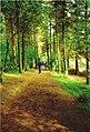 Beecraigs walking trail - geograph.org.uk - 249210.jpg