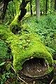 Bialowieza National Park in Poland0031.JPG