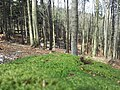 Bielawa, Poland - panoramio (21).jpg