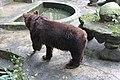 Big Bear in the pool.jpg