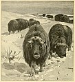 Big game hunting for boys, North America and Asia (1907) (20343476746).jpg