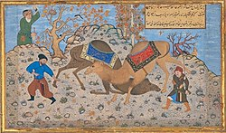 Bihzad Two camels fighting colors.jpg